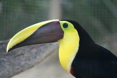 Uccello-becco Fotografia Stock Libera da Diritti