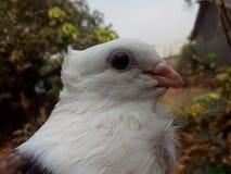 Uccello bello Fotografie Stock Libere da Diritti