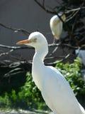 Uccello bianco Fotografia Stock