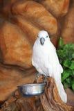 Uccello bianco Immagini Stock