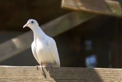 Uccello bianco Immagine Stock