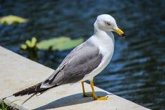 Uccello bianco vicino uno stagno Immagini Stock Libere da Diritti
