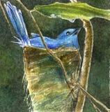 Uccello blu - illustrazione di stock