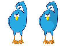 Uccello blu Fotografie Stock