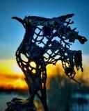 Uccello bronzeo Fotografia Stock