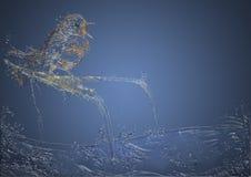 Uccello canoro liquido Immagini Stock