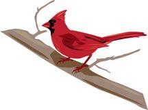 Uccello cardinale, maschio rosso, su un'illustrazione del ramo Fotografia Stock Libera da Diritti