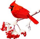 Uccello cardinale rosso Immagine Stock Libera da Diritti
