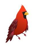 Uccello cardinale rosso isolato Immagine Stock Libera da Diritti