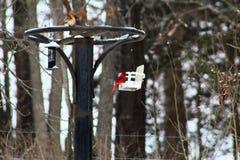 Uccello cardinale rosso luminoso nella neve su un alimentatore dell'uccello immagine stock libera da diritti