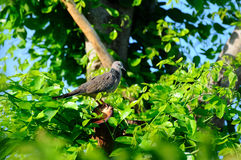 Uccello in cespuglio verdeggiante fotografia stock