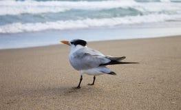 Uccello che aspetta sulla spiaggia fotografia stock libera da diritti