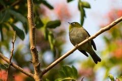 Uccello che cerca alimento immagine stock libera da diritti
