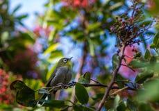 Uccello che cerca alimento fotografia stock