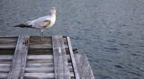 Uccello che esamina fuori il lago fotografia stock