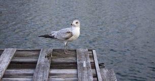 Uccello che esamina fuori il lago fotografie stock