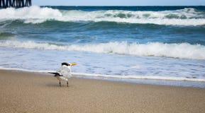 Uccello che guarda fuori all'oceano fotografia stock