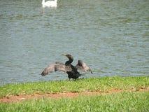 Uccello che prende il sole fotografie stock libere da diritti