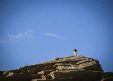Uccello che riposa su una roccia Fotografia Stock