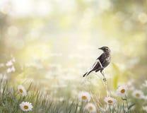 uccello che si appollaia in un prato Immagine Stock Libera da Diritti