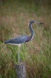 Uccello che si leva in piedi sulla rete fissa fotografie stock libere da diritti