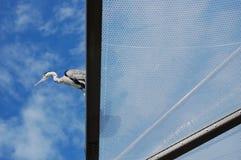 Uccello che si siede su un tetto fotografie stock libere da diritti