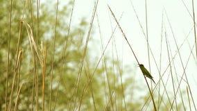 Uccello che si siede sul gambo dell'erba Fotografie Stock Libere da Diritti