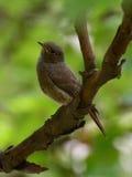 Uccello che si siede sul ramo di un albero Fotografie Stock