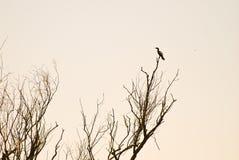 Uccello che si siede sull'albero morto Fotografie Stock