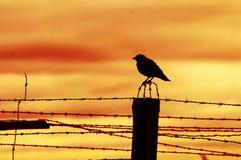 Uccello che si siede sulla rete fissa della prigione Immagine Stock