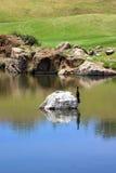 Uccello che si siede sulla roccia sul terreno da golf. Immagine Stock