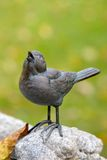 Uccello che sining una canzone Fotografie Stock Libere da Diritti
