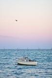 Uccello che sorvola barca al tramonto Immagini Stock Libere da Diritti