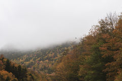 Uccello che sorvola scena di autunno Fotografie Stock Libere da Diritti