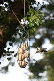 Uccello che vola all'alimentatore fotografie stock