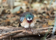 Uccello a Chester Zoo, Cheshire Fotografia Stock Libera da Diritti