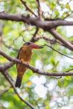 uccello Cicogna-fatturato del martin pescatore Immagine Stock
