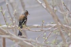Uccello, colore, molla, albero Fotografie Stock