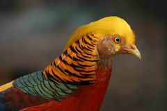 Uccello Colourful fotografia stock