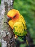 Uccello con becco sul ramo di albero immagini stock