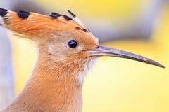 Uccello con i colpi ed il becco lungo immagini stock