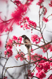 Uccello con il fiore fotografia stock