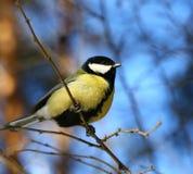 Uccello curioso Immagini Stock Libere da Diritti