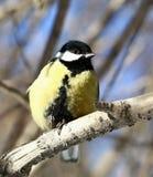 Uccello curioso Immagine Stock Libera da Diritti
