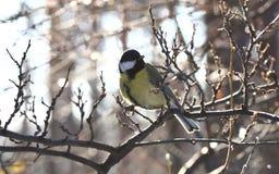 Uccello curioso Fotografie Stock Libere da Diritti