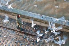 Uccello d'alimentazione Immagine Stock Libera da Diritti