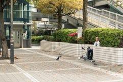 Uccello d'alimentazione dell'uomo anziano asiatico al marciapiede Fotografia Stock