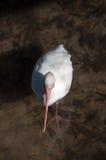 Uccello da sopra Fotografia Stock Libera da Diritti