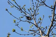 Uccello dall'Ucraina fotografia stock