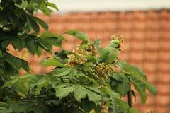 Uccello dalla finestra fotografia stock libera da diritti